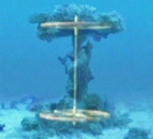 coralaxle